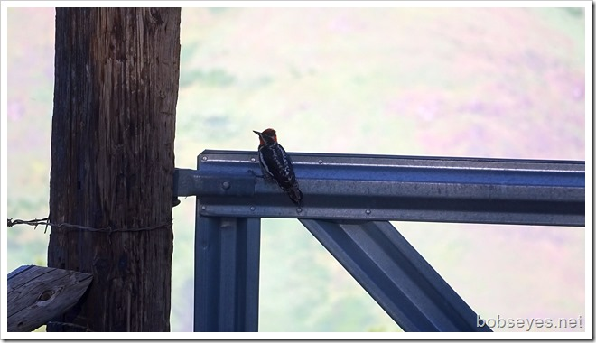 gatebird
