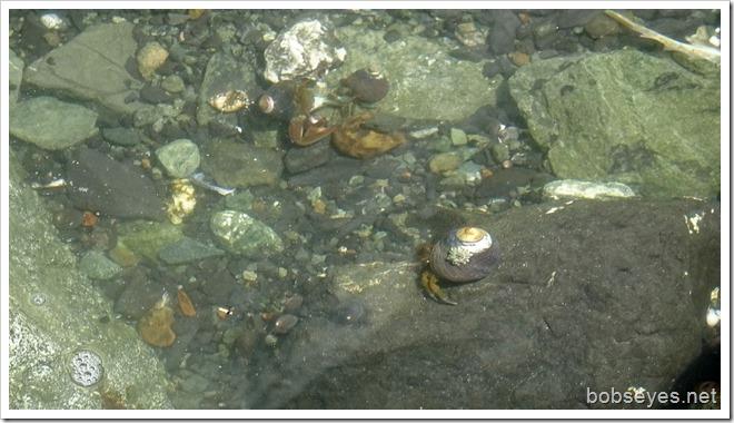 crabs4