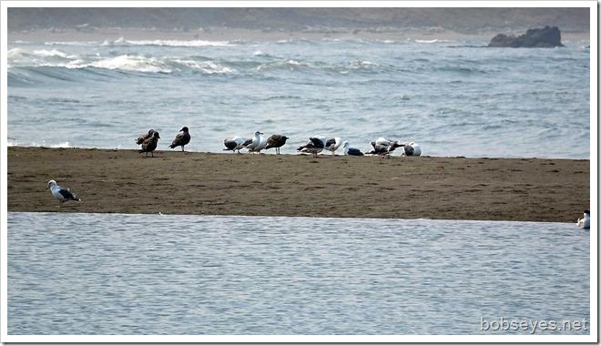 seaguls9
