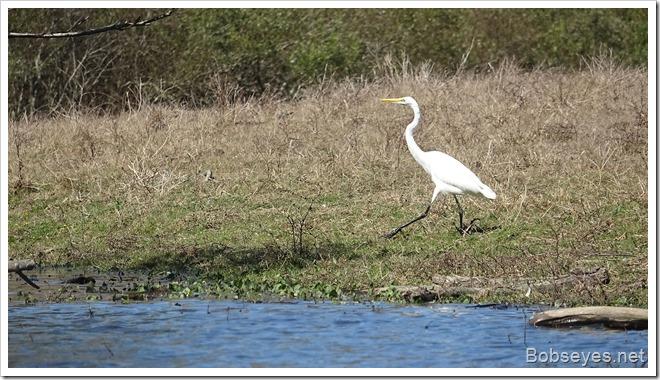 egret13