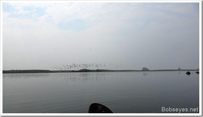 flybirds