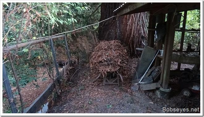 redwoodleaf