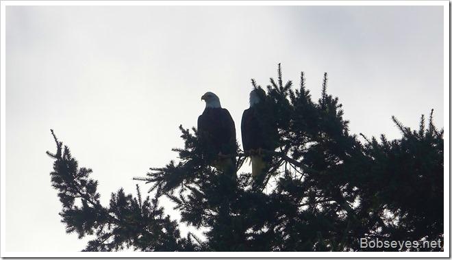 eagles8
