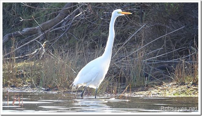 egret2