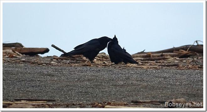 ravens10