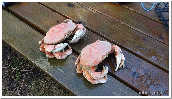 crab14