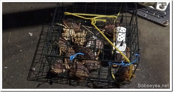 crabpot12