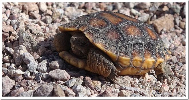 turtle18