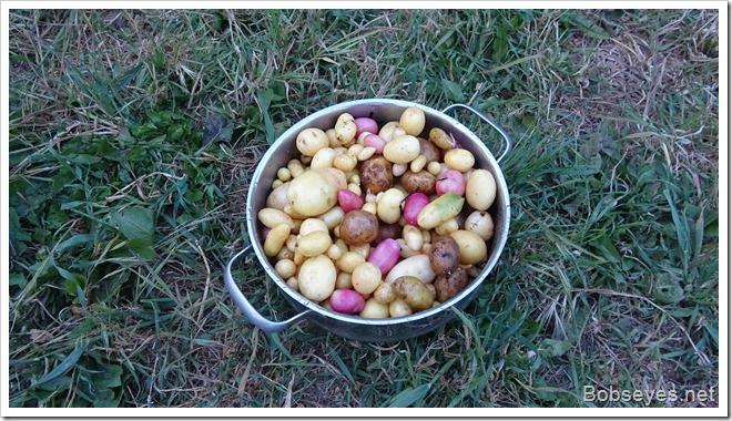 potatoes14