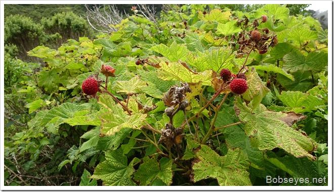 thimbleberrys10