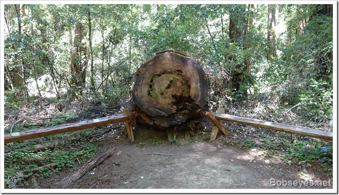 treerot