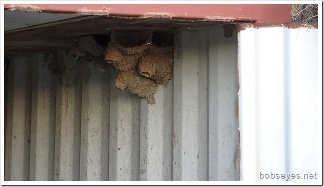 nests14