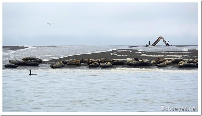 sealwave9