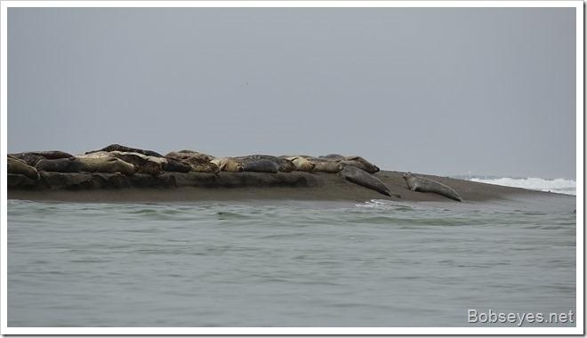 sealys