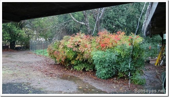 rainred