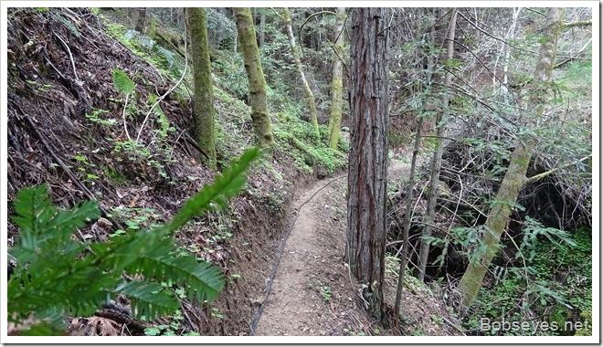 trail4