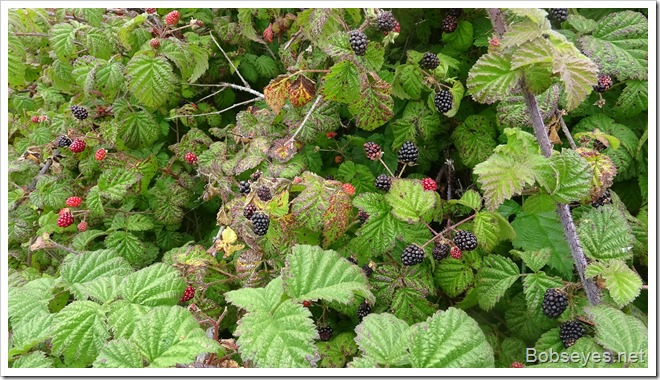 berries15