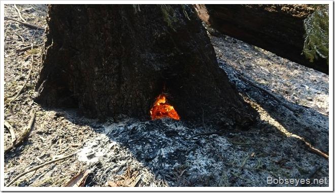 fire21