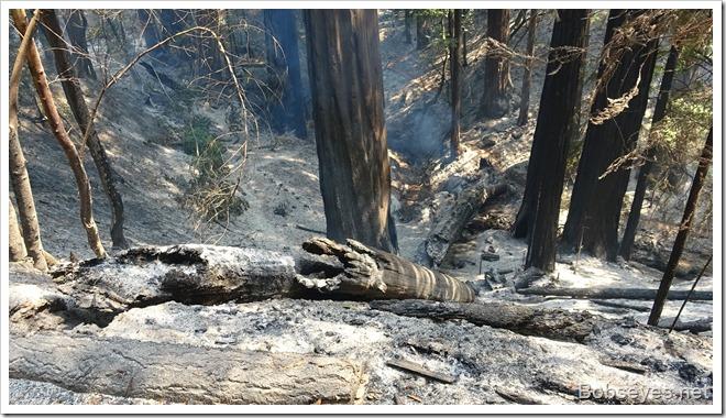 treefire10