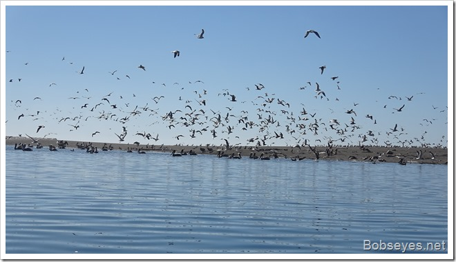 birds11