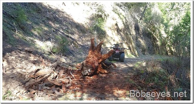 stump3