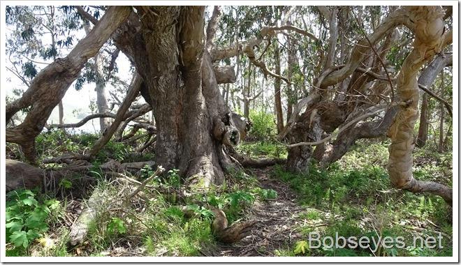 trees14