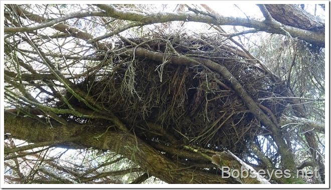 nest13
