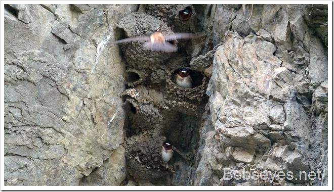 nests10_thumb