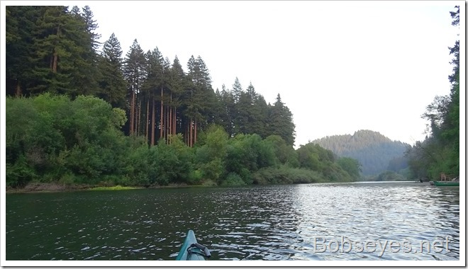 redwoods12