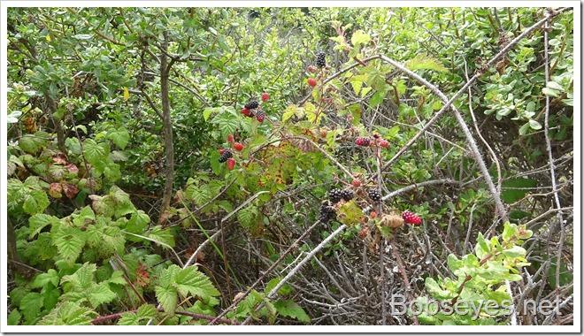 berries10