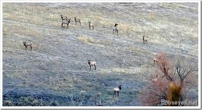 herd13